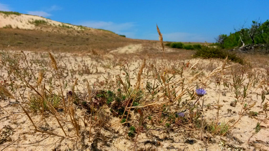 Flower and sand dunes by Trepanation42