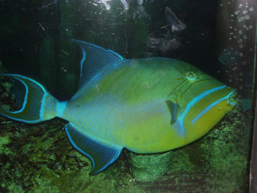 Glow in the dark fish by rangavar on deviantart for Glow in dark fish