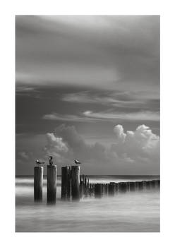 Posts and Gulls