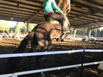 horse stock rearing