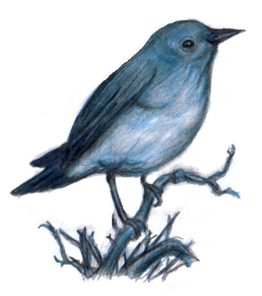 Bird on Branch - Colour by nobodysghost on DeviantArt