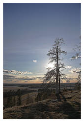 A Dead Pine