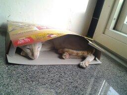 My cat by LightningFarron165