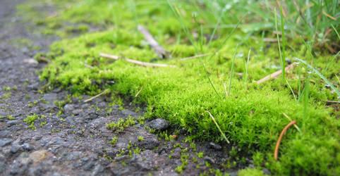 Moss Fun
