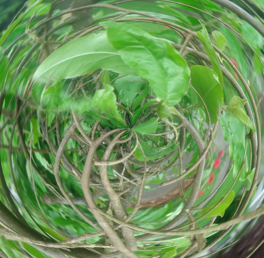 Swirled by mantha1624