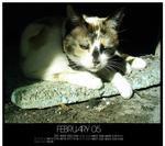 Calendar Fabruary - Kiwy