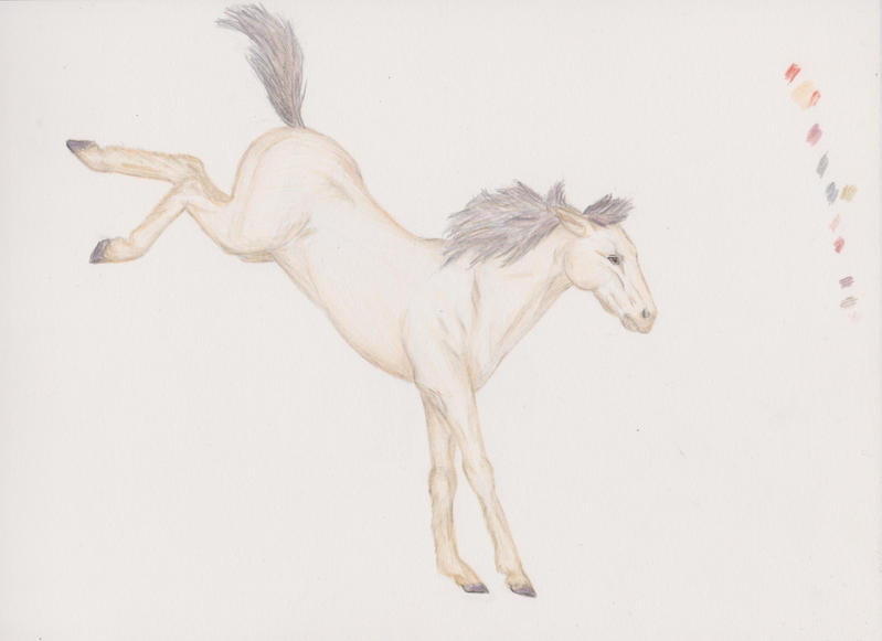 Horse01 by varinike