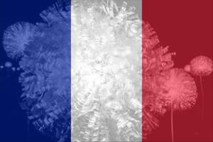 France Flowers
