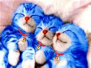 Doramos baby cats by didys on deviantart doramos baby cats by didys thecheapjerseys Gallery