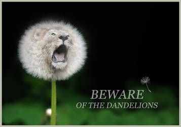 Beware Of The Dandelions by Sarahorsomeone