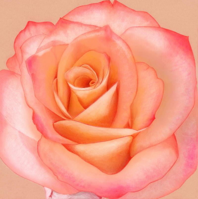 Rose by Sarahorsomeone