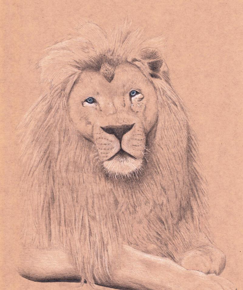 Lion Sketch by Sarahorsomeone