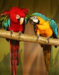 Macaw Friends