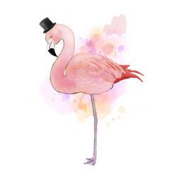 Dapper Flamingo