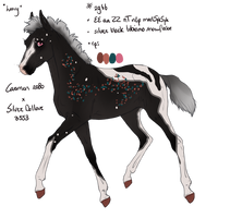 2966 Padro Foal Design by WildOracle