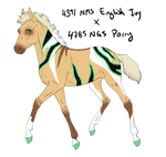 7504 Padro Foal Design by WildOracle