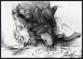 Drinking Wolf by SpiritOfTheFire