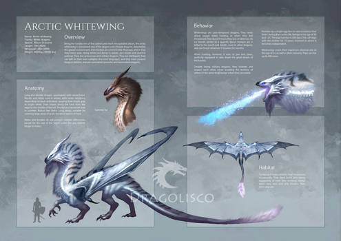 Arctic Whitewing (artbook page)