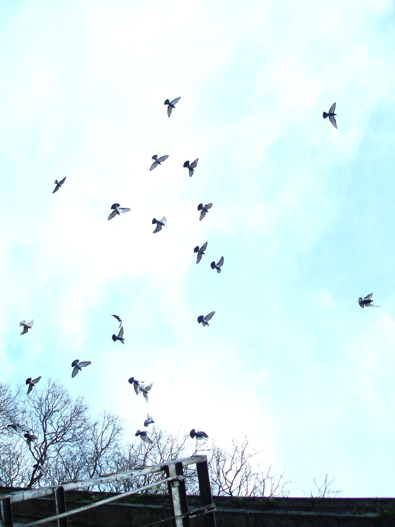 birds flying by jajejijoju