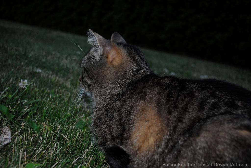 Night Furry Photo by FalconFeatherTheCat