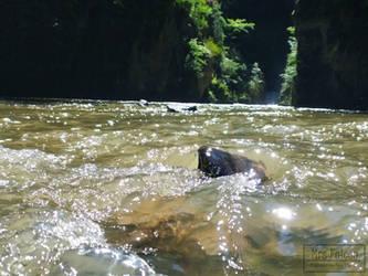 Water ripple-veil