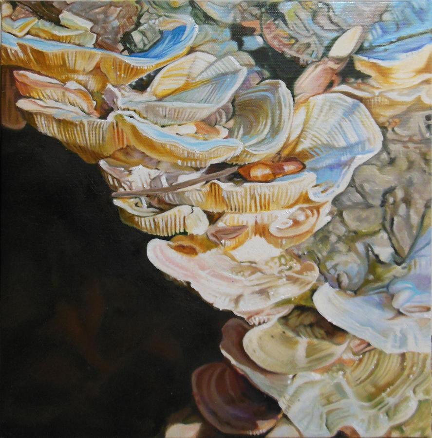Shelf Fungus by Iliketoplayinthedirt
