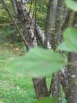 Blurred Leaves.