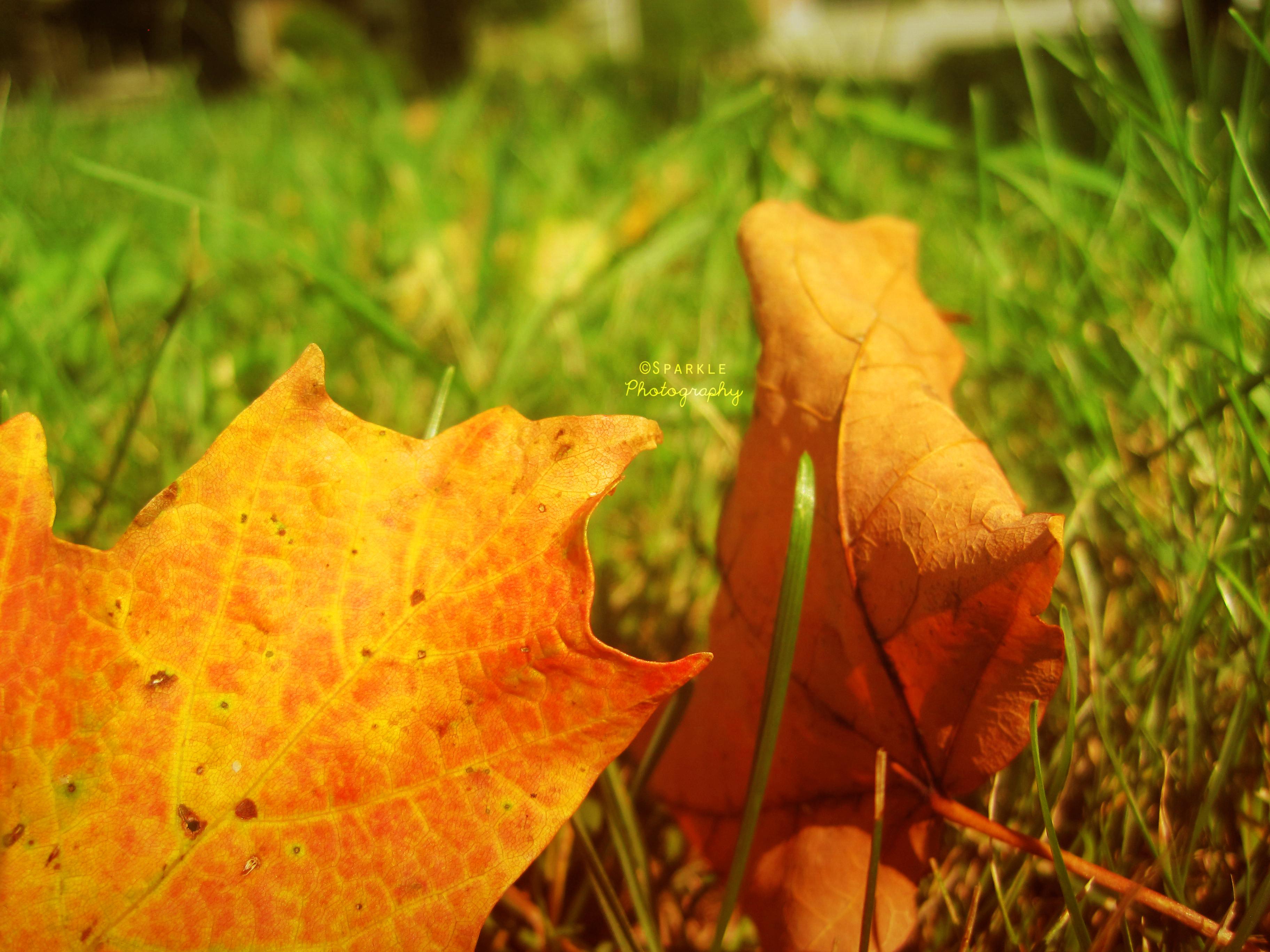 - T h e  C o l o r  O f  F a l l - by Sparkle-Photography