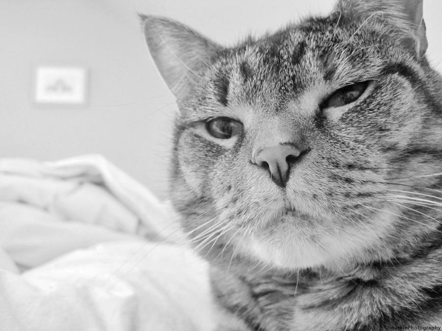 Cat Profile. by Sparkle-Photography