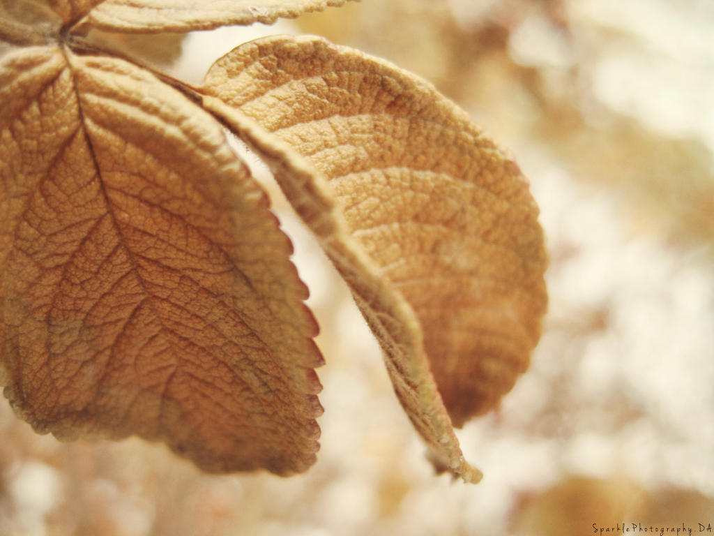 Golden Leaves. by Sparkle-Photography