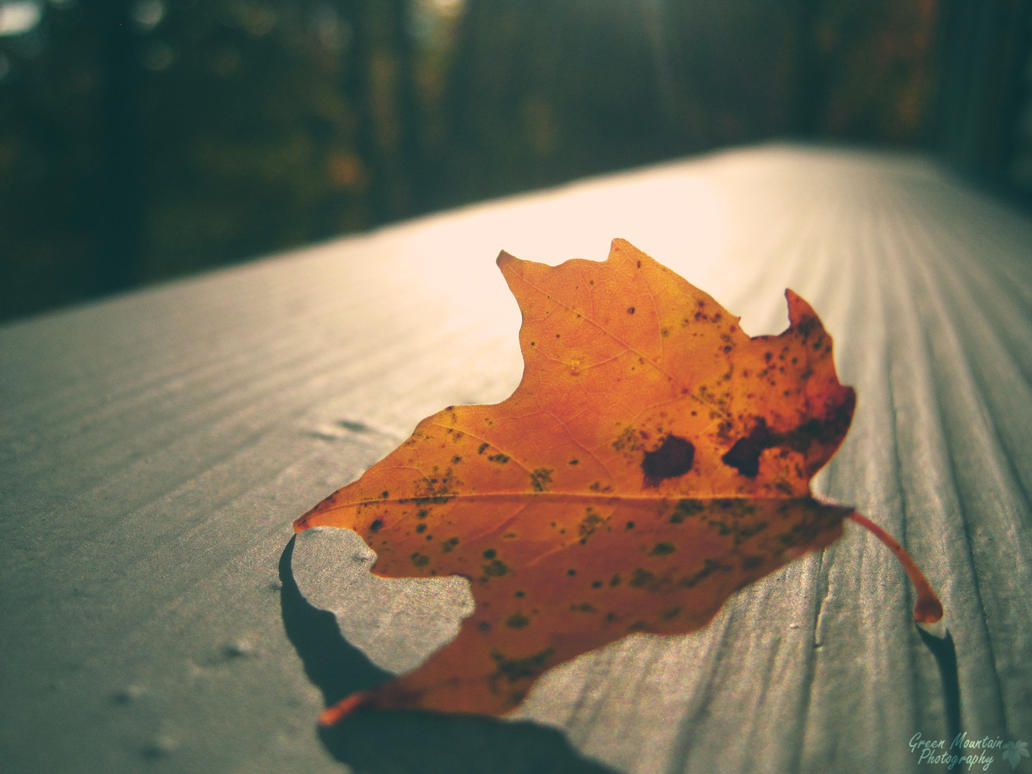 The Autumn Leaf. by Sparkle-Photography