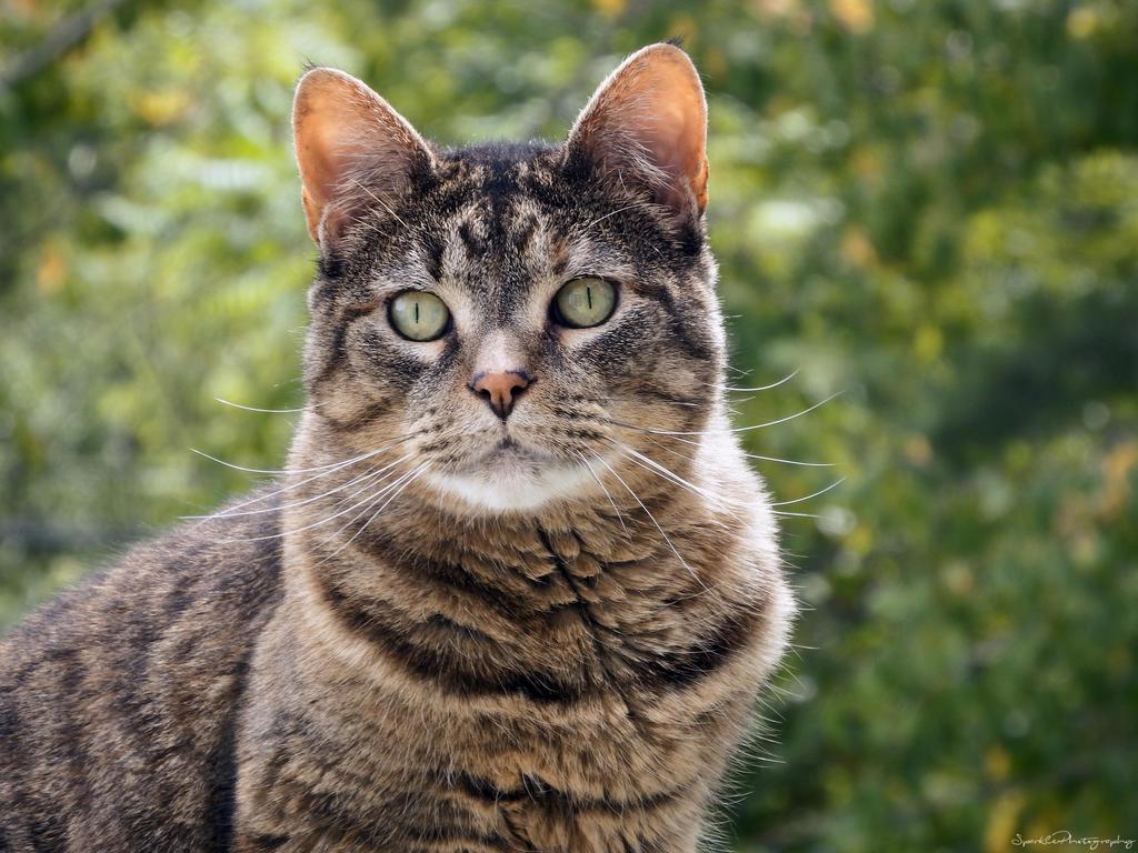 An Autumn Kitty. by Sparkle-Photography