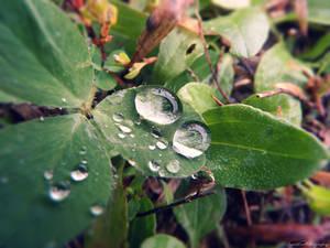 Rain Droplets.