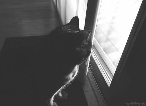 Observing.