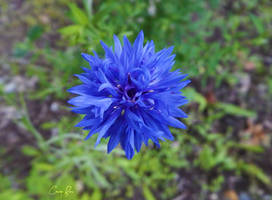 Vibrant Blue. by Sparkle-Photography