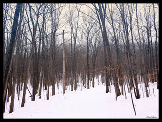 January Hike #1. by Sparkle-Photography