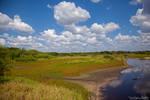 Myakka River III.