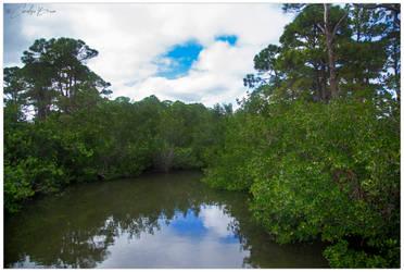 Mangrove Wetland.