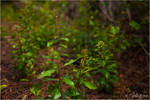 Green Growth. by Sparkle-Photography