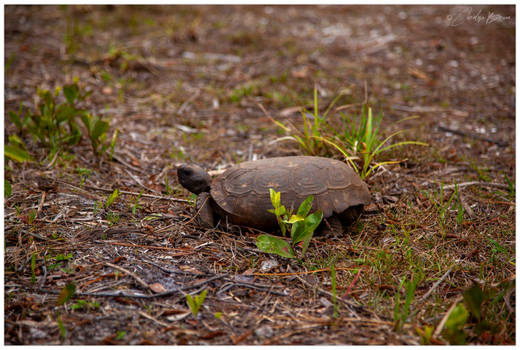 Mr. Turtle.