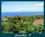 Paradise-9