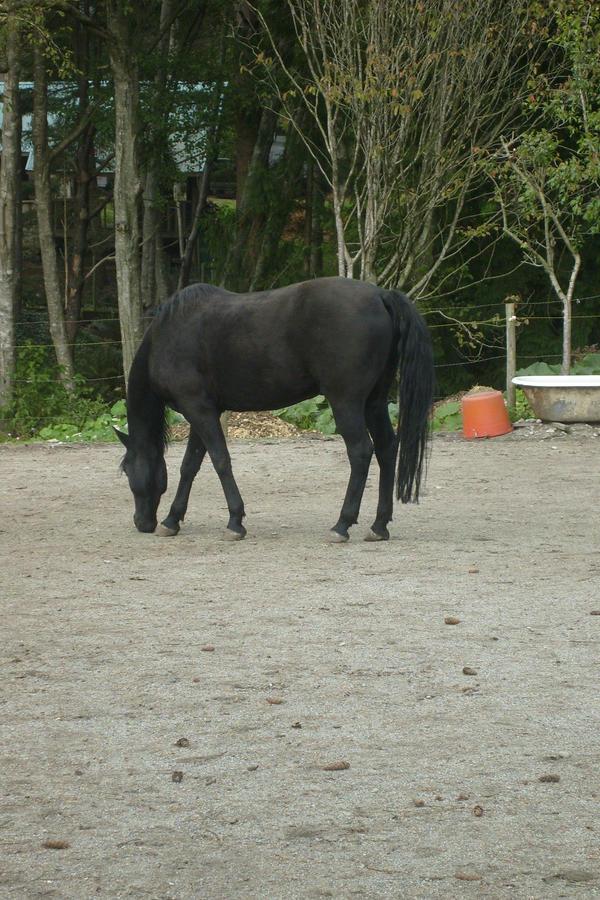 STOCK horse 8 by xXNamaste