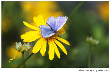 Blue One by krysolet