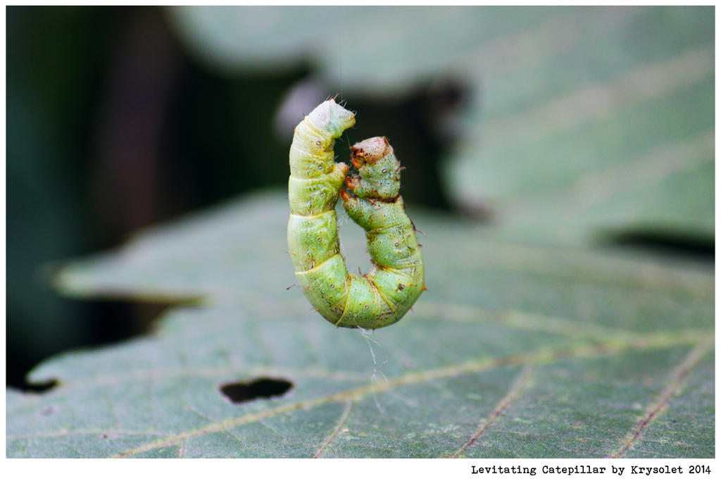 Levitating Catepillar by krysolet