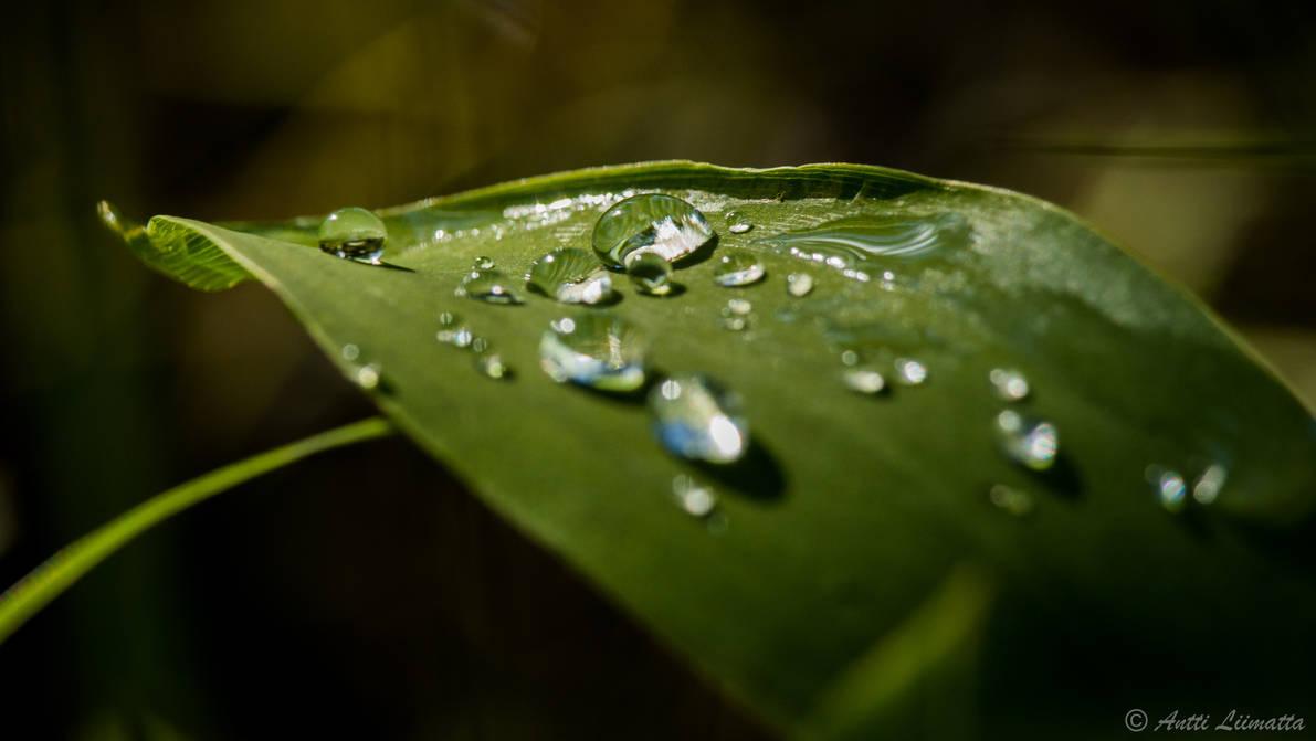 Droplets On Sunlight