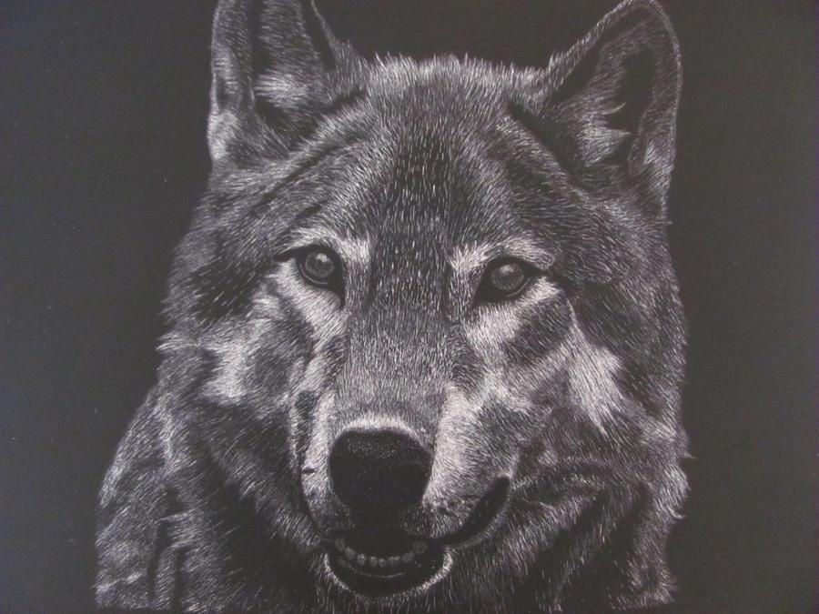 Wolf by WinterWolf10