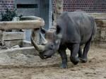 rhino 2 by Drezdany-stocks