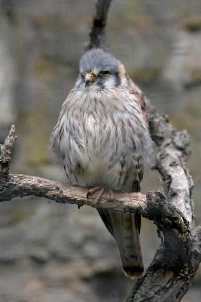 bird 26 by Drezdany-stocks