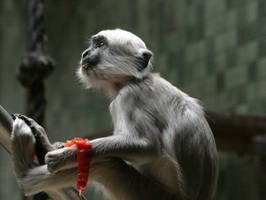 monkey 3 by Drezdany-stocks
