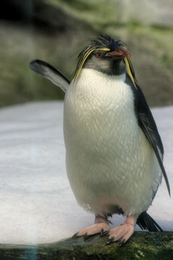 Penguin by Drezdany-stocks